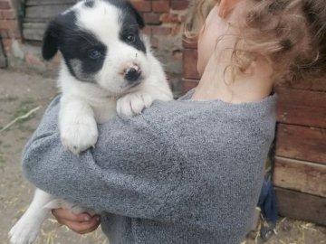 γλυκό μικρό σκυλί στα χέρια του κοριτσιού - σκύλος στα χέρια του κοριτσιού (εικόνα από την προσφορ�