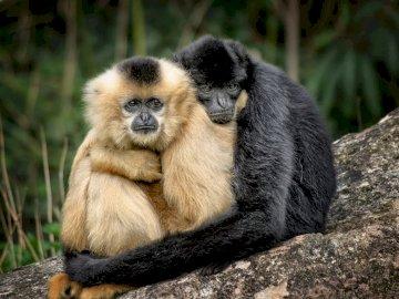 Przyjaciele - przyjaciele z wybiegu w miejskim zoo