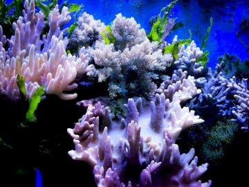 Koralowiec - Podwodny świat koralowców