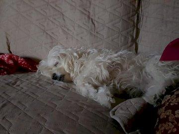 Amy pennica - dolce dormire sul divano