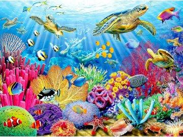 Żółwie w morzu - tropiki, ocean, woda, ryby