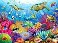 Χελώνες στη θάλασσα