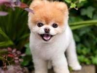 Lief hondje