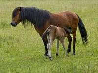 Mustang avec une jument :)