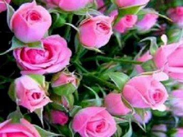 Róże najpiękniejsze kwiaty. - Róże najpiękniejsze kwiaty  .