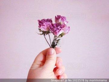 Kwiatki... - Kwiatki..............proszę