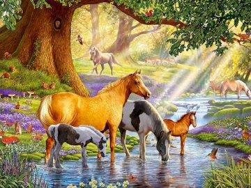 Pferde am Bach - Pferde an der Wasserstelle, Natur