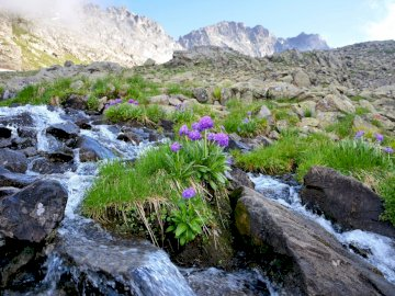 Landschaft - Berglandschaft mit einer Blume