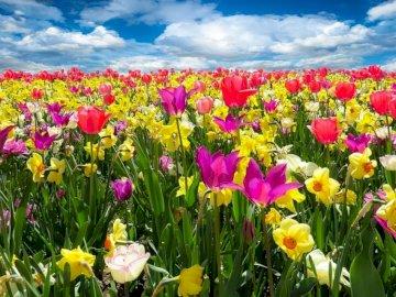 Λουλούδια αγρού - Εάν τακτοποιήσετε αυτά τα παζλ, θα βγει μια όμορφη εικό