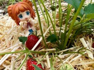 Σεζόν φράουλας - Καλές ώριμες φράουλες