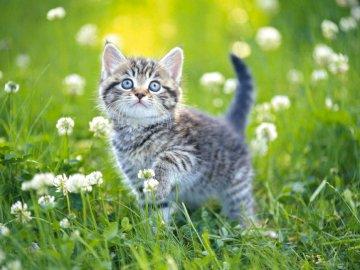 Pisoi mic în pajiște - Dragă pisicuță în ritm, Va doresc o stivuire placuta :) Zuzu-ul tău