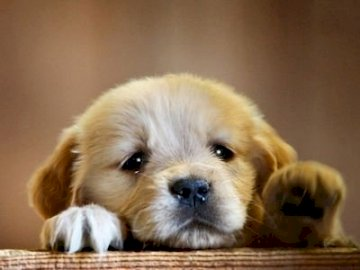 Câine trist - Câine dulce și trist, Cine nu va rezista la un astfel de îndulcitor și va face acești iubiți