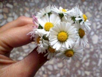 Λουλούδια  - Σας παρακαλούμε