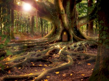 Zamieszkane drzewo w lesie - Φωτογραφία ενός δέντρου με πολλές ρίζες, με μια πόρτα π