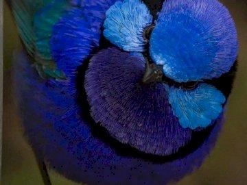 Blue bird - blue bird on a branch
