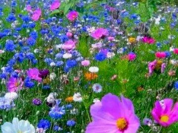 Feld voller Blumen - Schön von wilden Blumen