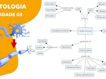 Tecido nervoso - Organograma do tecido nervoso