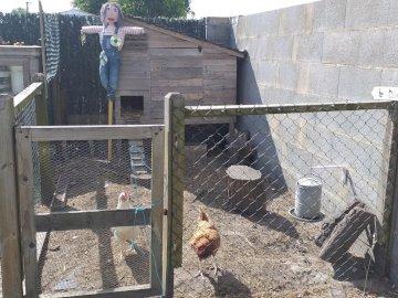 der Hühnerstall - Dies ist der Hühnerstall unseres Hauses