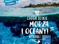 Oceans Day