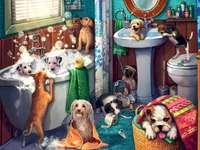 Cães no banho
