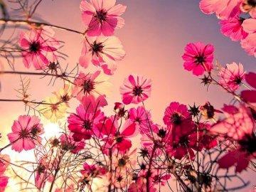 PINKE BLUMEN - Schöne rosa Blumen auf einem schönen Hintergrund. EMPFEHLEN!
