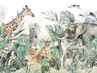 Zwierzęta na Safari