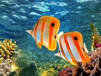 Coral reef - Complete the coral reef and colorful fish puzzle