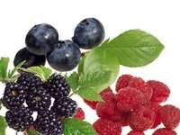 forest fruits - Forest flavors. Forest fruits berries blackberries raspberries.