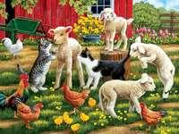 Dança da fazenda