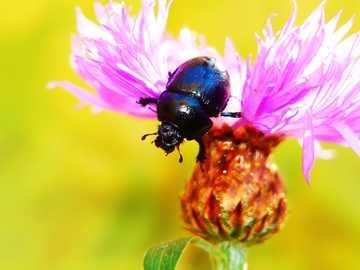 Ein Wurm auf einer Blume - Der Wurm sitzt auf einer Blume auf dem Feld