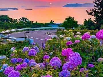 Landschaft mit Hortensien. - Puzzle: Landschaft mit Blumen.