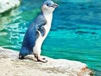 Pequeño pinguino