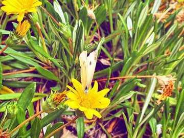 Schmetterling #natur #blumen #ficuzza - Schmetterling #natur #blumen #ficuzza