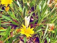 mariposa #naturaleza #flores #ficuzza