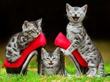 Cats in shoes. - Kittens in red high heels.