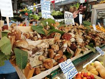 for mushrooms - mushrooms - Market hall in Modena