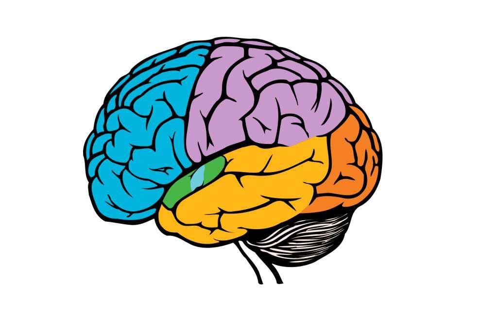 Úgy hisszük - Fedezze fel a központi idegrendszert alkotó egyik szervet (13×9)