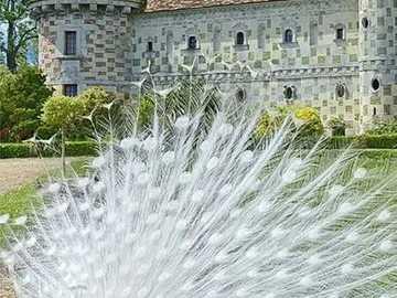 biały paw w zamku - zamek z białym pawiem w ogrodzie