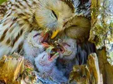 śniadanie w gnieździe - śniadanie w gnieździe z mamą