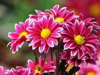 Flores e beleza