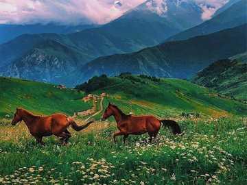 Wunderschönes Hochland von Nordossetien-Alanya - Wiesenpferde, Berge, Himmel.