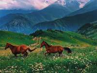 Gyönyörű hegyvidék Észak-Oszétia-Alanya