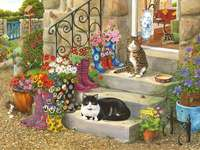 Süße katzen. - Süße Katzen vor dem Haus.