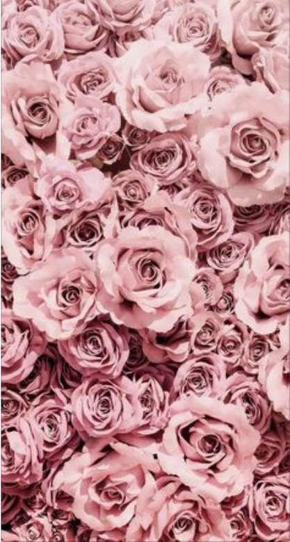 růžičky v krásné barvě (7×13)