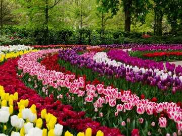 Keukenhof - Jardines, flores, tulipanes.