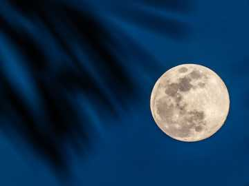 full moon in blue sky - Full moon in blue sky with palm leaves.