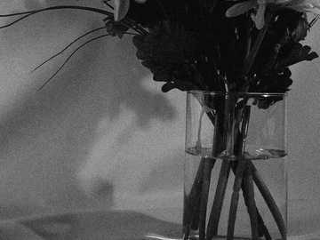 EXPERIMENTELLES 2 - Graustufenfoto von Blumen in klarer Glasvase. Bogota Kolumbien