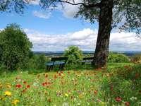 Sommaräng - Ordna en sommaräng med vackra blommor.