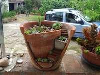 Plantas gordas