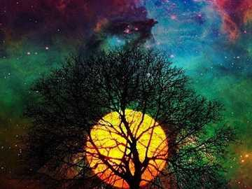 moon behind a tree - a tree and a nice sky